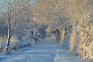 winter-1093798_640